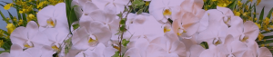 供花サービス